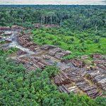 Amazonas' skoger gir netto utslipp til klimakrisen